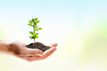 The Basics of Green Living: Why Now?