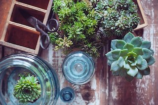 Benefits & Tips of Indoor Gardening