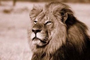 Cecil Poaching and Animal Rights