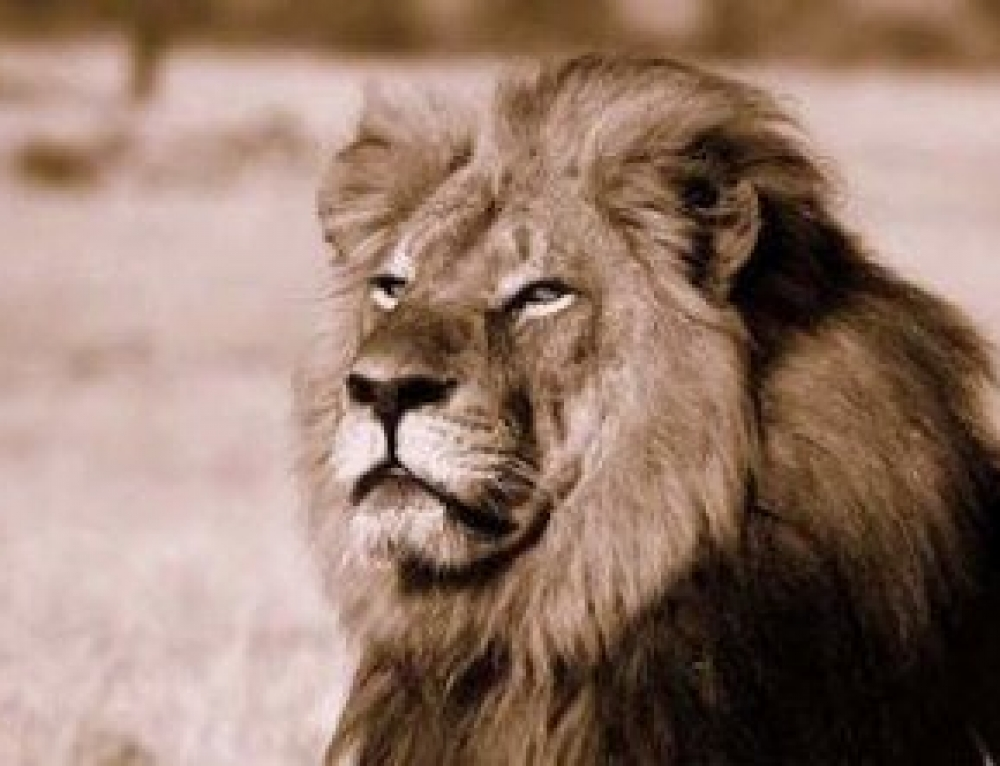 Honouring Cecil: Raising Awareness about Poaching & Animal Rights