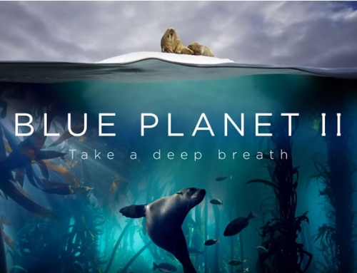 Blue Planet II Is Back & Its Message Is Stronger Than Ever