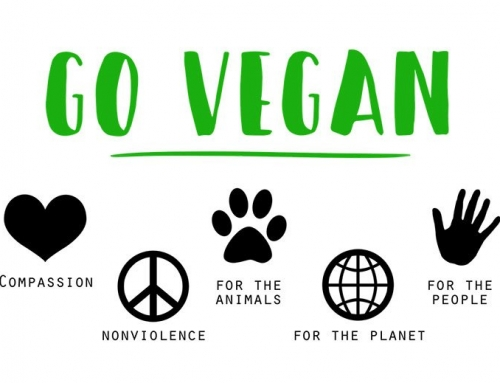 From Veganism to Slow Fashion: In 2019 It's Time to Start Caring